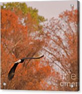Fall Eagle Acrylic Print