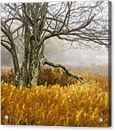 Fall Ferns And Fog Acrylic Print