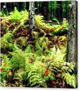 Fall Ferns Of Cannan Valley West Virginia Acrylic Print by Dan Carmichael