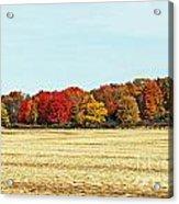 Fall Field Acrylic Print
