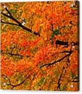 Fall Fiesta Acrylic Print