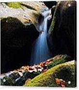 Fall Flow Acrylic Print