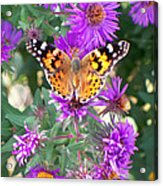 Fall Flutterby Acrylic Print