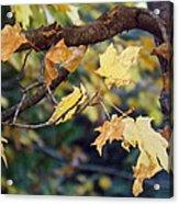 Fall Foilage Acrylic Print