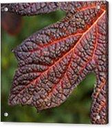 Fall Foliage 4 Acrylic Print