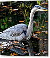 Fall Foliage And Fowl Acrylic Print