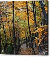 Fall Foliage Colors 03 Acrylic Print
