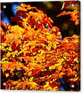 Fall Foliage Colors 16 Acrylic Print by Metro DC Photography