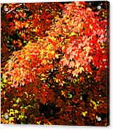 Fall Foliage Colors 21 Acrylic Print