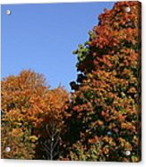 Fall Foliage In The Arboretum Acrylic Print