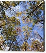 Fall Foliage - Look Up 2 Acrylic Print