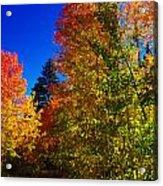 Fall Foliage Palette Acrylic Print