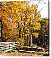 Fall Foliage Vi Acrylic Print