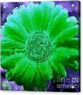 Fall For Me Purple Green Acrylic Print by Holley Jacobs