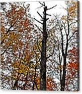 Fall Forrest Acrylic Print by Stephanie Grooms
