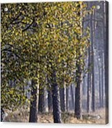 Fall Acrylic Print by Frits Selier