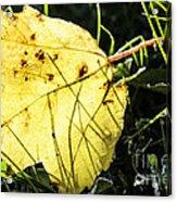 Fall Frost Acrylic Print