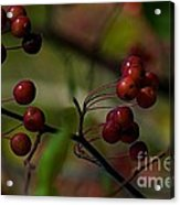 Fall Fruit Acrylic Print