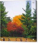 Fall Geese Of Washington Acrylic Print
