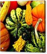 Fall Gourds Acrylic Print