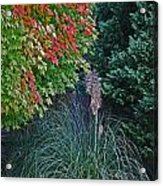 Fall Grass Acrylic Print
