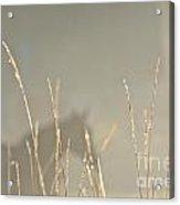 Fall Grasses Acrylic Print