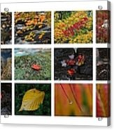 Fall Greetings Acrylic Print