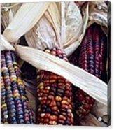 Fall Harvest Corn Acrylic Print