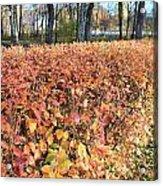 Fall Hedge Acrylic Print