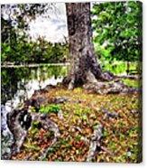 Fall In Audubon Park Acrylic Print by Ray Devlin