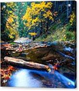 Fall In Bulgarian Forest  Acrylic Print