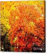 Fall In Full Bloom Acrylic Print