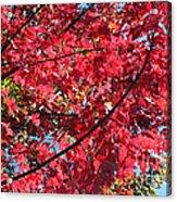 Fall In Illinois Acrylic Print