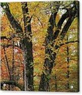 Fall In Kentucky Acrylic Print