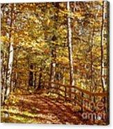 Fall In Michigan Acrylic Print