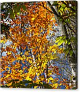 Fall In Nh 2 Acrylic Print