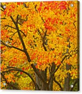 Fall In Pennsylvania Acrylic Print