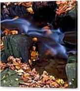 Fall In Rock Creek Park Acrylic Print