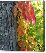 Fall In The Orchard Acrylic Print