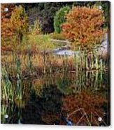 Fall In The Wetlands Acrylic Print