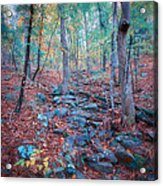 Fall In The Woodlands Acrylic Print
