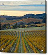 Fall In Wine Country Acrylic Print