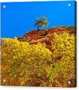 Fall In Zion Acrylic Print