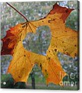 Fall Ing In Love Acrylic Print