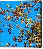 Fall-ing Leaves Acrylic Print