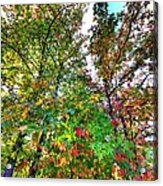 Fall Is Here Acrylic Print
