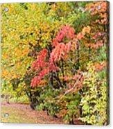 Fall Landscape 3 Acrylic Print