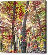Fall Laser Beams Acrylic Print