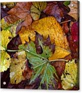 Fall Leaves 1 Acrylic Print