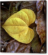 Fall Leaves 4 Acrylic Print